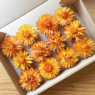 花材セット ドライフラワー ヘリクリサム オレンジ12個 ハーバリウムなどに♪(ドライフラワー)