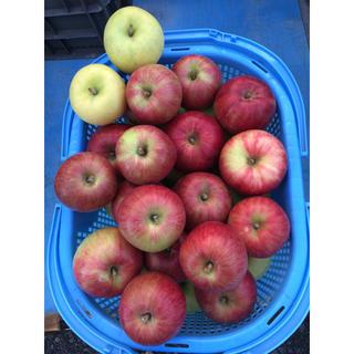 青森県産 りんご 葉とらずみよしレッド ※4キロ(フルーツ)