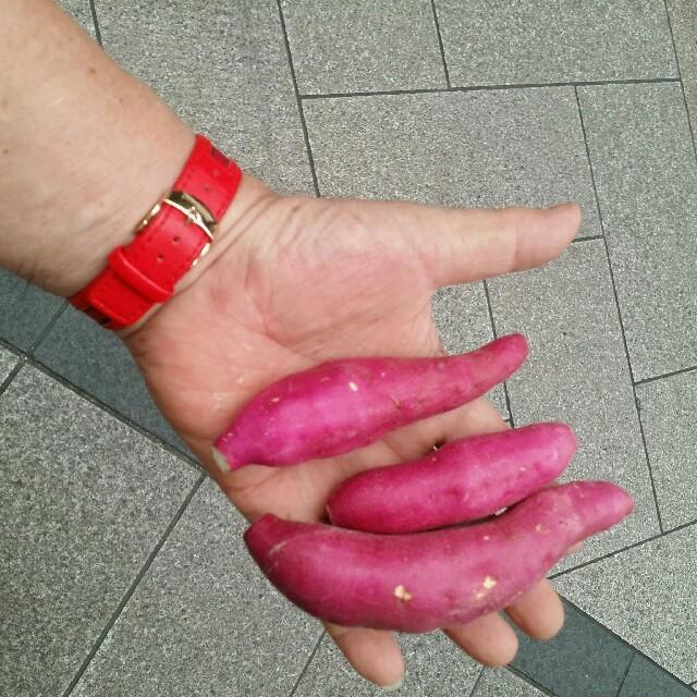 □値下げ□これおいも宮崎紅)新さつまいも2kg(2S、3S..丸、長混合 食品/飲料/酒の食品(野菜)の商品写真