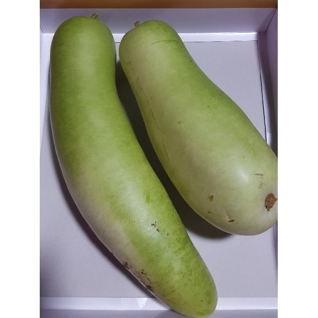 kiki様専用のページ  ( ゆうがお 2本 とカボチャ) 食品/飲料/酒の食品(野菜)の商品写真
