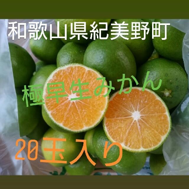 和歌山みかん 極早生みかん 和歌山 紀美野 20玉入 食品/飲料/酒の食品(フルーツ)の商品写真