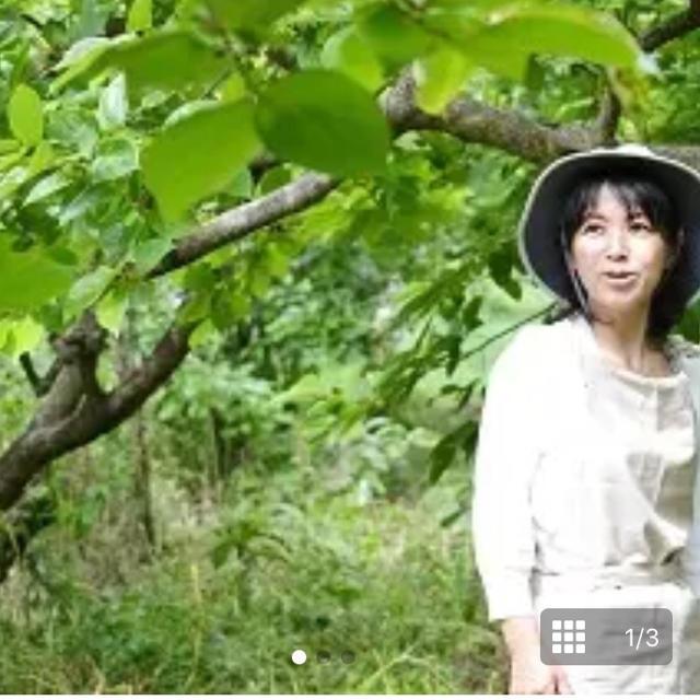 柿の葉ミントティ  2袋 <普通郵便> 送料込 1,550円  食品/飲料/酒の飲料(茶)の商品写真