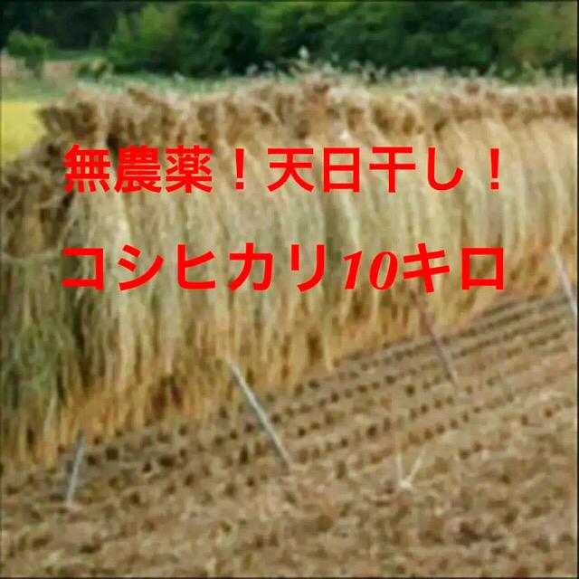 天日干し!コシヒカリ 10kg 食品/飲料/酒の食品(米/穀物)の商品写真