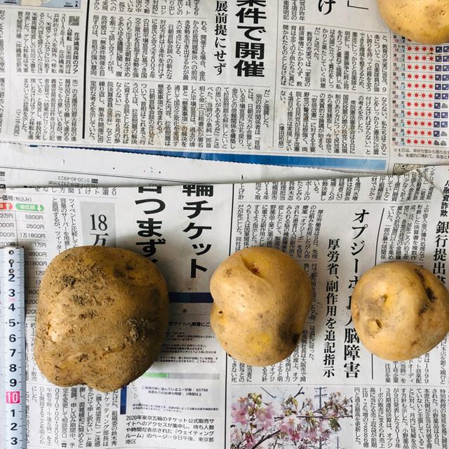 北海道産 じゃがいも 食品/飲料/酒の食品(野菜)の商品写真