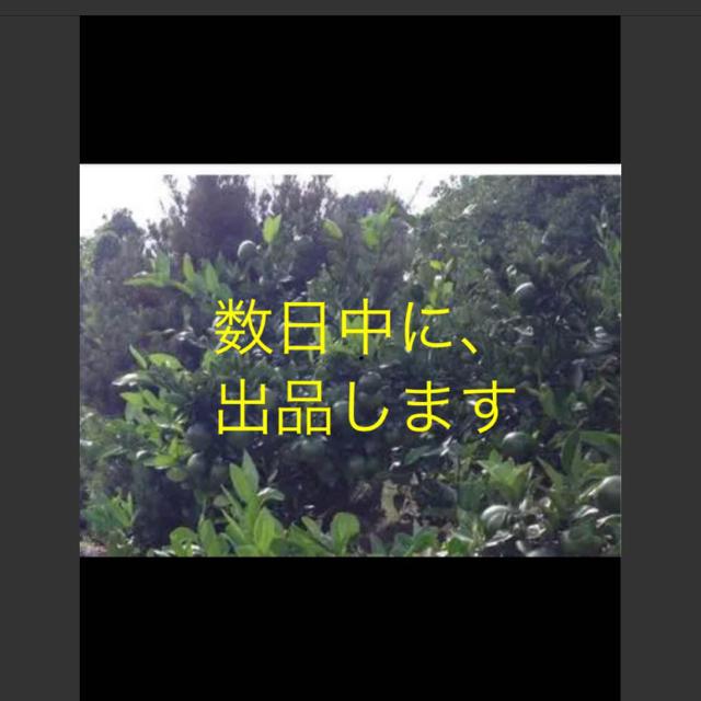 青ミカン ★出品予定★ 食品/飲料/酒の食品(フルーツ)の商品写真
