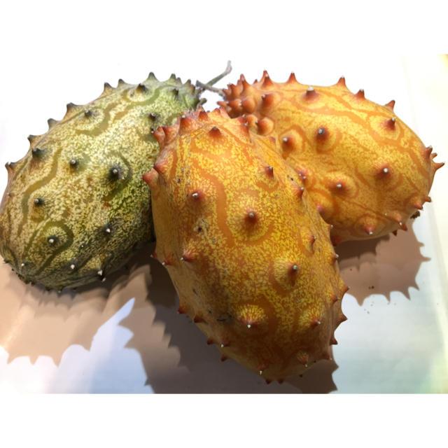 キワノフルーツ ツノメロン ツノニガウリ 高級フルーツ 5個(約1.5kg) 食品/飲料/酒の食品(フルーツ)の商品写真