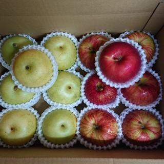 ◎送料込み◎鳥取県産 二十世紀 梨、長野県産 サンつがる りんご(フルーツ)