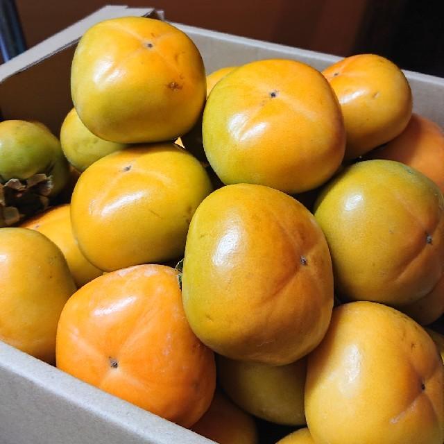 ●送料込み●和歌山県産 たねなし柿 平核無柿 5kg 食品/飲料/酒の食品(フルーツ)の商品写真