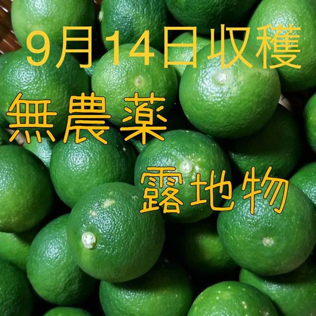無農薬 露地物 すだち スダチ 佐賀県産 1.0㎏ 天然物 食品/飲料/酒の食品(フルーツ)の商品写真