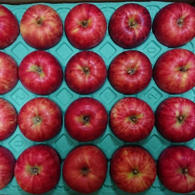減農薬栽培りんご 青森県産 サンつがる 約5kg20玉 食品/飲料/酒の食品(フルーツ)の商品写真