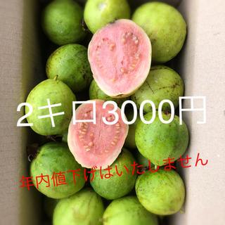 無農薬グァバ徳之島産2キロ3000円(フルーツ)