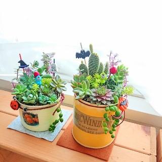 多肉植物 ハロウィン寄せ植え 小人の多肉の森2個セット すぐ飾れる◎(その他)