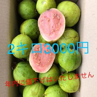 無農薬徳之島産グァバ2キロ入り2800(フルーツ)