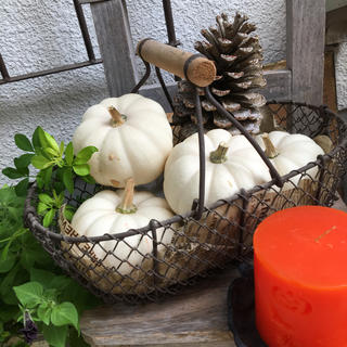 ようちゃん様専用!白かぼちゃ8個(野菜)