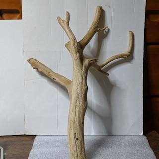 天然流木(置物)
