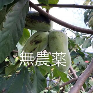 【16日注文締め切り】幻の果物☆無農薬☆訳ありポポー☆1キロ以上