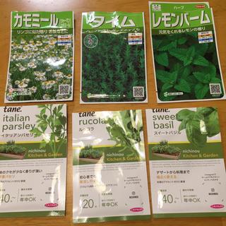ハーブの種 6種類 家庭菜園(野菜)