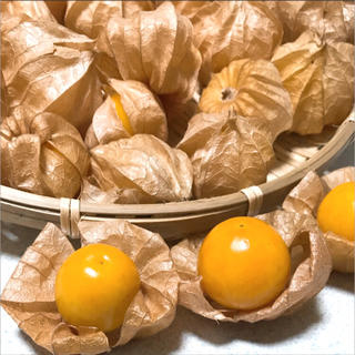 ☆9〜10月限定☆ オレンジチェリー/フルーツほおずき 25粒 青森県産(野菜)