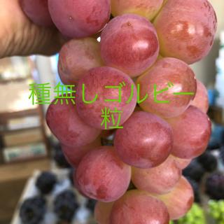 山梨県勝沼産 種無しゴルビー   1kg   粒 (フルーツ)