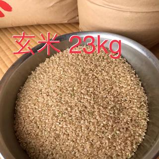 コシヒカリ 玄米23kg