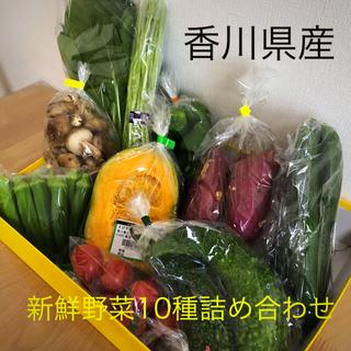 香川県産 新鮮野菜10種詰め合わせセット