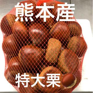 熊本産 栗 1キロ★タイムセール★