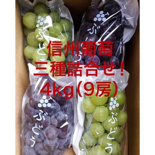信州葡萄詰合せ 巨峰 黄甘 ピオーネ 種無し 4kg(9房) ブドウ ぶどう(フルーツ)