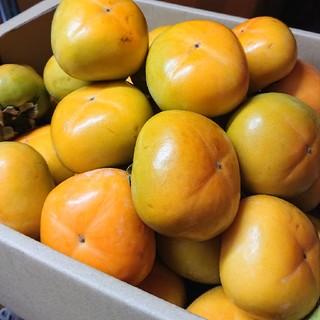 ●送料込み●和歌山県産 たねなし柿 平核無柿 5kg
