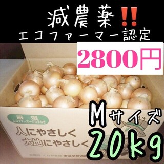 北海道産 減農薬 玉ねぎ Mサイズ 20kg