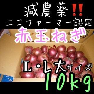 北海道産 減農薬 赤玉ねぎ 10キロ