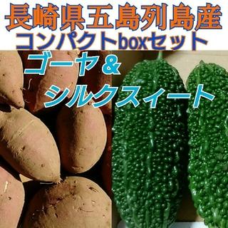 無農薬❗〈ゴーヤ&さつまいも〉コンパクトboxセット 長崎県五島列島産