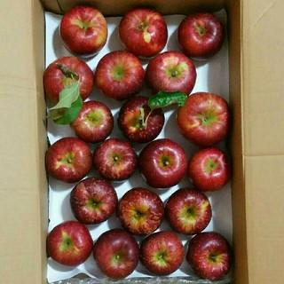 長野県産りんご 詰め合わせパック 20個  りんご