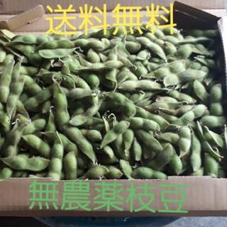【送料無料】無農薬枝豆