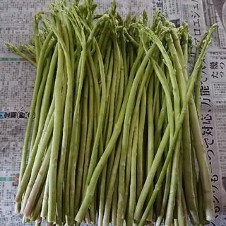 (えいたん様専用)佐賀県産グリーンアスパラ(野菜)