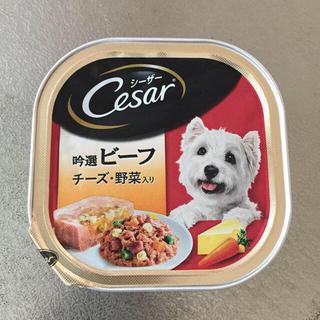 シーザー(CASAR)のシーザー各種特価100円(ペットフード)