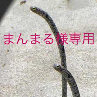 マッシュマニア(mash mania)のカットソー、ジーンズ(カットソー(長袖/七分))