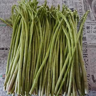 (えいたん様専用)佐賀県産グリーンアスパラ 2セット             (野菜)