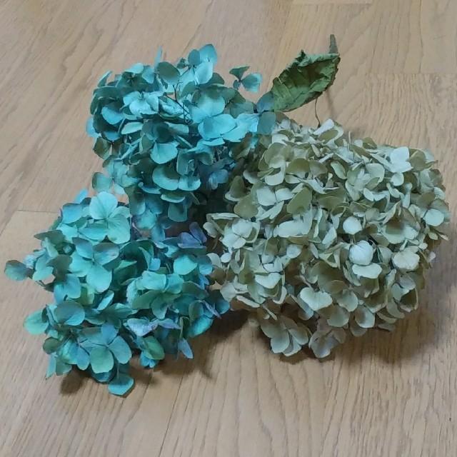 【t様確認用】アジサイドライフラワー ヘッド 青緑~グリーンベージュ 3 ハンドメイドのフラワー/ガーデン(ドライフラワー)の商品写真