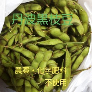 丹波黒枝豆(ゆうパケット)(野菜)
