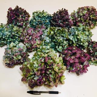 2019年度紫陽花のドライフラワーのヘッド80サイズ(ドライフラワー)