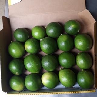 国産無農薬  マイヤーレモン  グリーン 1.3kg 送料無料(フルーツ)