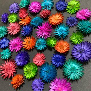 チーゼルフラワー 8カラー 40輪 カラフルアソート ハーバリウム花材 (ドライフラワー)
