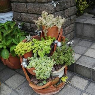 6月上旬製作 シマリスアイランド 多肉植物 寄せ植え(プランター)