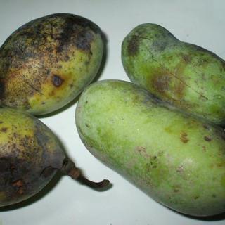 ポポー種(フルーツ)