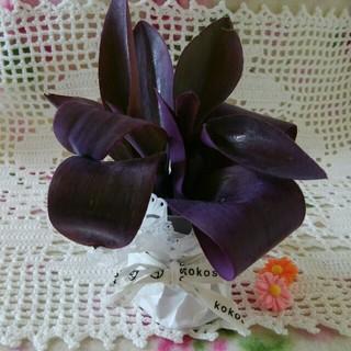 5日まで 300円 多肉植物 ムラサキゴテン 紫御殿 パープルハート 3カット苗(その他)