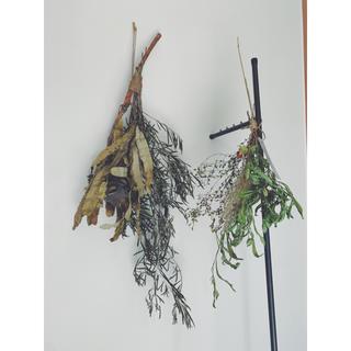 ネイティブフラワーのグリーンスワッグBファイアーウッドバンクシアのスワッグセット(ドライフラワー)