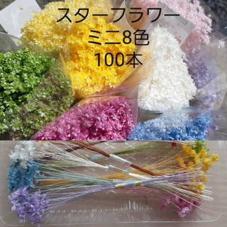 スターフラワーミニ8色 100本(ドライフラワー)