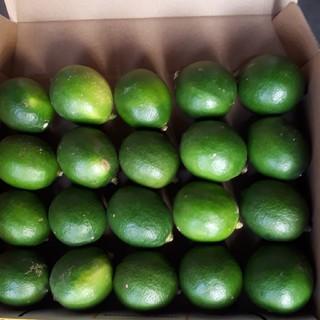 国産無農薬  マイヤーレモン  グリーン 1.2kg 送料無料(フルーツ)