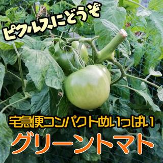 ピクルス向けグリーントマト1.2kg宅急便コンパクトでお届け!(野菜)