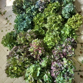 botanical life様ご専用♡秋色紫陽花ドライフラワー(ドライフラワー)